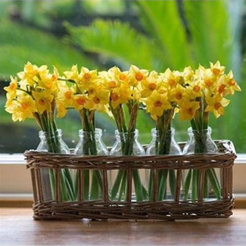 Chai thủy tinh 100ml cắm hoa