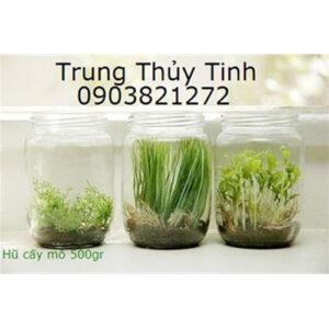 HŨ THỦY TINH 500G CẤY MÔ